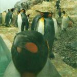 旭山動物園の「夜の動物園」に行ってきました。行く価値あり。